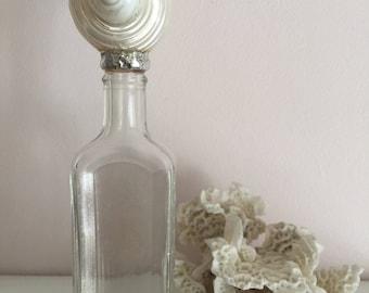 Polished Turdo Seashell Vintage Bottle