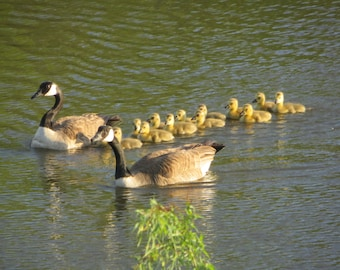 Family in the Pond