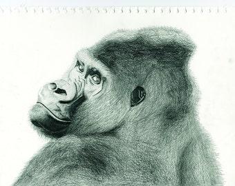 Gorilla - Giclee print