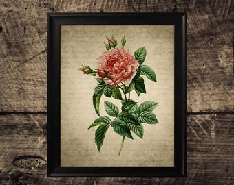 Vintage rose print, home decor, vintage wall art, rose flower art, printable rose, instant download