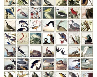 Audubon Birds - Digital Collage Sheet - Inchies AND Scrabble Size - INSTANT DOWNLOAD