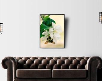 Bumblebee and Apple Blossom Photograph - fine art photography, garden art decor, botanical art, flower nature, green yellow cream wall art