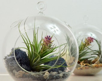 Air Plant Terrarium// Large Glass Orb// Grey// Living Home Decor// Green Gift