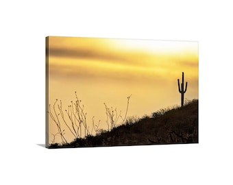 Arizona Desert Cactus Art, Sonoran Desert Picture, Tucson Gift, Sunset Photography, Desert Sunset Art, Saguaro Cactus Photograph, Ocotillo