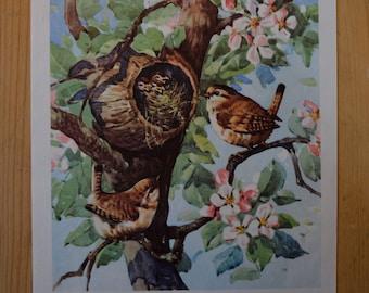 1950s Vintage Bird Illustration - Farmyard Friends