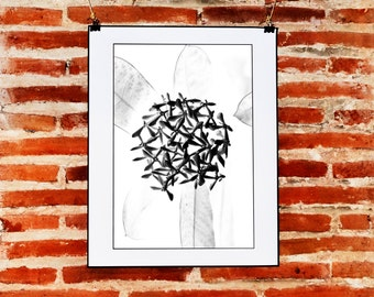 Botanical Art Photography Wall Art, Flower Photo, Printable Minimalist Art, Black and White Flower, Abstract Nature Art, Abstract Print