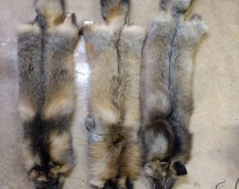 mutation fox dark well furred #1&2 is left