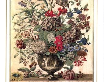 "July Flowers Art Print- 12 MONTHS of FLOWERS- 1700s Botanical Illustration- Winterthur Museum Floral Art- Baby Wedding Gift Idea- 7.75 x 10"""
