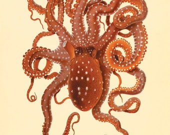 Octopus art print Vintage old prints sea art print Nautical art print Ocean art print Natural History Victorian art print antique wall art