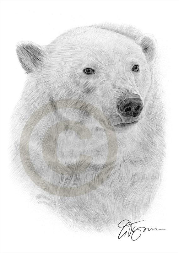 Ours polaire arctique crayon dessin imprimer oeuvre format - Ours polaire dessin ...