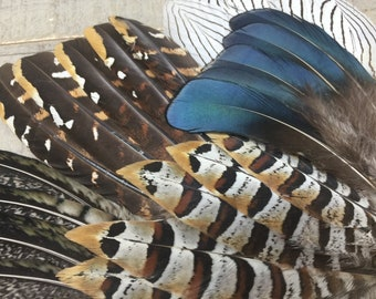 SET of 25 Big Pheasant Feathers - unique feathers, patterned feathers, iridescent feathers, earthy feathers, real feathers, natural feathers