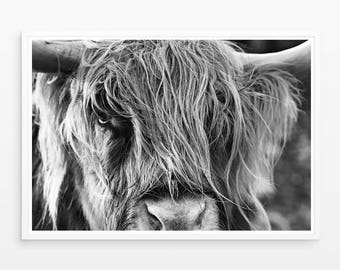 Highland Cow Print, Large Wall Art Print, Photography Print, Best Selling, Black and White Print, Poster, Cow Photography, Scottish Cow art