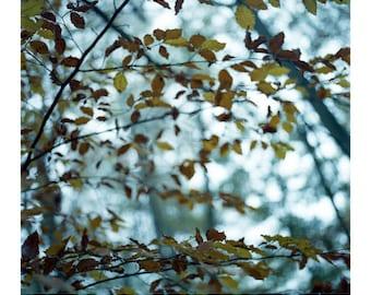 Autumn Leaves, Thornham Walks, Signed Art Print / Suffolk Woodland Photography / Leaves Photo