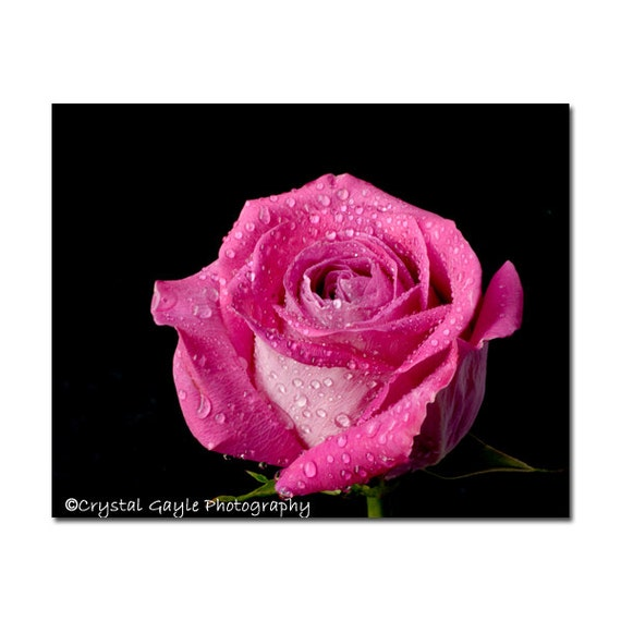 Rose Photography Picture Pink Victorian Decor French Cottage