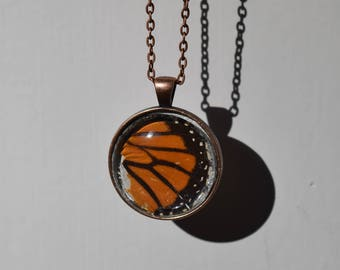 Real Butterfly Wings Necklace