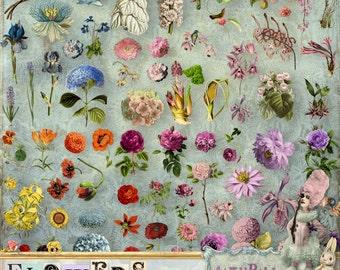 Flowers - 3 x Digital Collage Sheet ATC .png - itKuPiLLi - Printable, Instant download