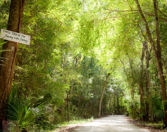Trees and Winding Peaceful Road Imspirational Sign - Fine Art Photography Print Picture
