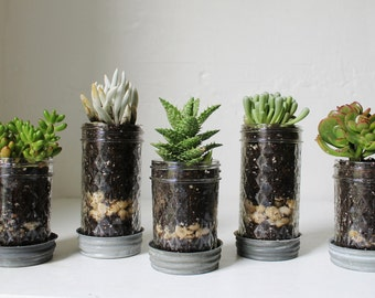 Mason Jar Planters with drainage - set of 5 - UpCycled Jelly Jar and Vintage Zinc Lid Saucer Plates - BootsNGus Home and Garden Glass Pots