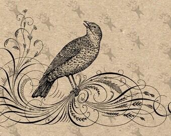 Jahrgang Bild Vogel Kalligraphie Clip Art Design übertragen digitale Datei Instant Download Jute Stoff übertragen Eisen auf Kissen HQ 300dpi