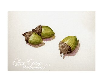 3 Little acorns, original botanical watercolor 5x7  giclee print, nature green trees outdoors small sage brown woodland