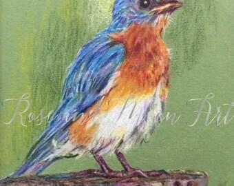 Original art- Original bluebird art- Bluebird art- Colored pencil bluebird- Bluebird of happiness- Happy bird