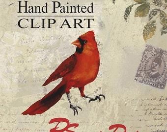 Cardinal Clipart, Bird Clipart, Hand Painted Clipart