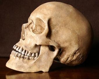 skull print, human skull replica