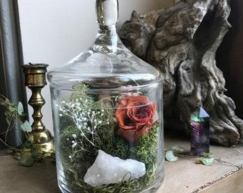 Terrarium Red Rose