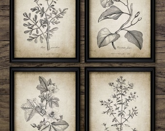 Antique Botanical Print Set of 4 - Plant Botanical Art Decor - Digital Art - Printable Art - Set Of Four Prints #189 - INSTANT DOWNLOAD