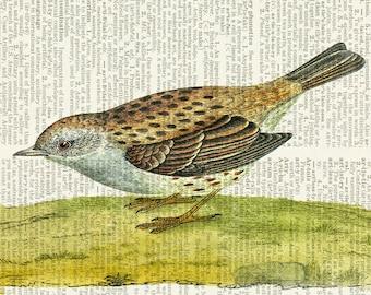 bird VIII dictionary page print
