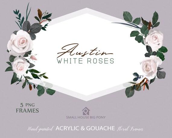 Watercolour Flower Frames Set - Hand Painted Graphics,  white rose flower,  hand drawn frames,  flower Frame - Austin White Roses