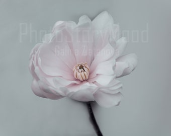 Magnolia Photography Spring decor Flower gift print Pink magnolia Gift for home Romantic gift photography Magnolia flower Magnolia download