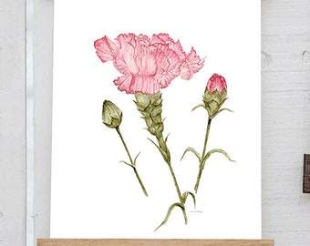 Watercolor Carnation January Birth Flower Print