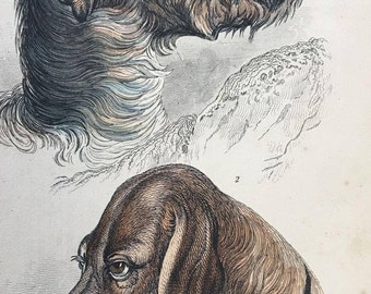 1800's Jardine Stag / Deer Hound and Bloodhound DOGS Hand Colored Engraving