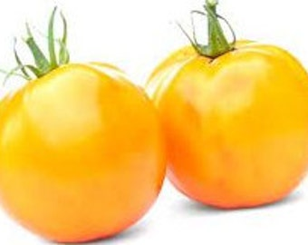 "Heirloom Tomato Seeds - ""Jubilee"" Golden Tomatoes"