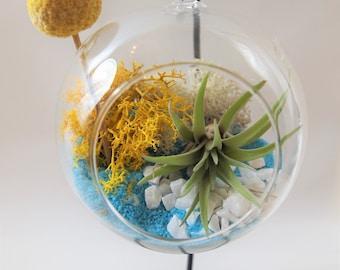 Blue and yellow Air plant terrarium kit  ; unique gift; tillandsia; air plant;terrarium;office decor;wedding gift
