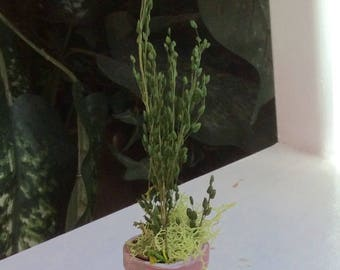 Miniature Flower Pot, Terra-cotta with White Wash, Miniature Greenery, Handcrafted by Olive, Fairy Garden Accessories