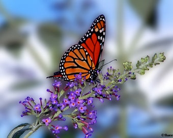 Monarch Butterfly On A Butterfly Bush Photograph Butterfly Wall Art Flower Pictures Earthtone Decor Blue Floral Print 16x20 Wildlife Photo