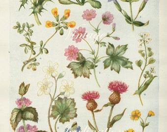 Vintage Antique 1930s Flowers botanical bookplate original lithograph art print illustration 4420