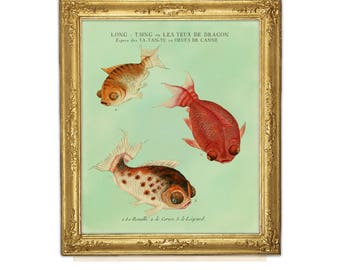 Goldfish Print, Fish Art,  Feng Shui Art, Goldfish Art, Natural History, Aquatic Print, Fish, Chinese Goldfish, Aquarium Fish Art