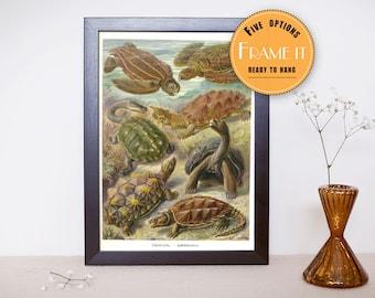 "Vintage illustration of prehistoric turtles by Ernst Haeckel - fine art print, sea creatures,sea life, 8""x10"" ; 11""x14"", FREE SHIPPING - 268"