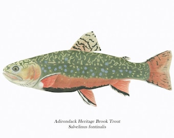ADK Brook Trout /FISH ILLUSTRATIONS/Archival Giclee Print/Conservation Art/Native Fish