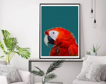 Vibrant Red Parrot