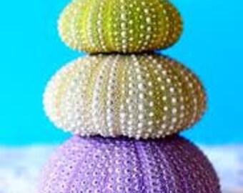 Pastel Sea Urchins  Cross Stitch Pattern
