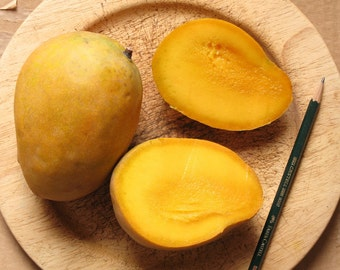 Edward variety live grafted mango tree from Puerto Rico
