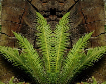 Symetric Fern in Acrylic Glass Print