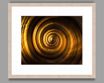 SEASHELL #13 - Framed Art Photography, Home Decor, Wall Art, Nature, beach, seashells, ocean