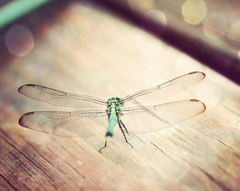 dragonfly photography insect art prints dragonfly wall art boho baby nursery wall decor dragonfly nature photos kids toddler room bug art