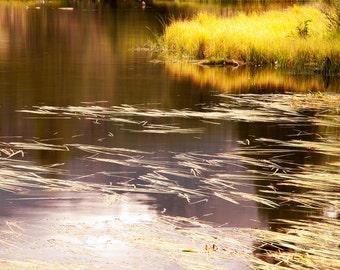Fall pond photo, Colorado art, Sprague Lake photo, fall decor, autumn reflection art, rustic livingroom decor, log cabin decor | Golden Pond