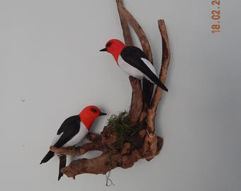 Birds, Red Head Woodpecker Pair Sculpture, One of a Kind, Hand Painted, Bill Fewell Carver, Woodpeckers, Songbirds,